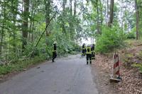 Baumsturz in Elbersdorf, 04.08.2018