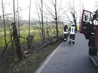 Baumsturz Porschendorf, 08.04.2008