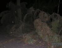 Baumsturz 18.01.2007